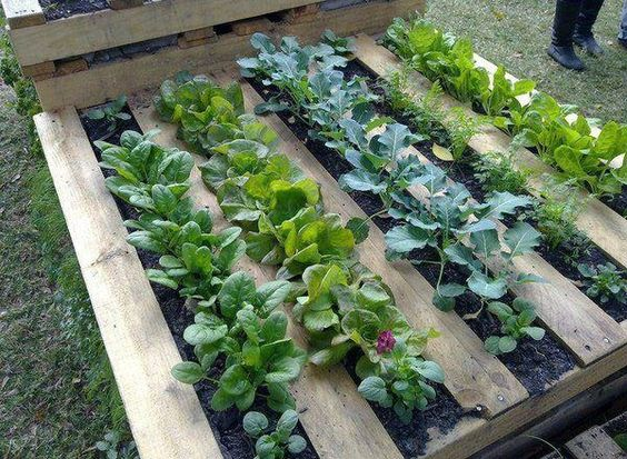 jardinage facile