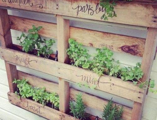 Un jardin avec des palettes de bois