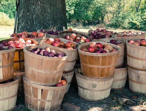 Agrémenter sa sortie aux pommes
