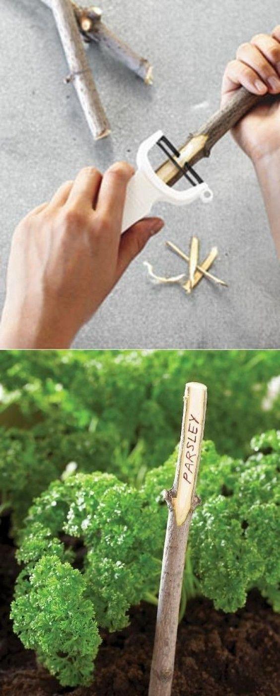 idée identifier plants jardin