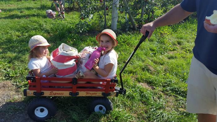la cueillette des pommes